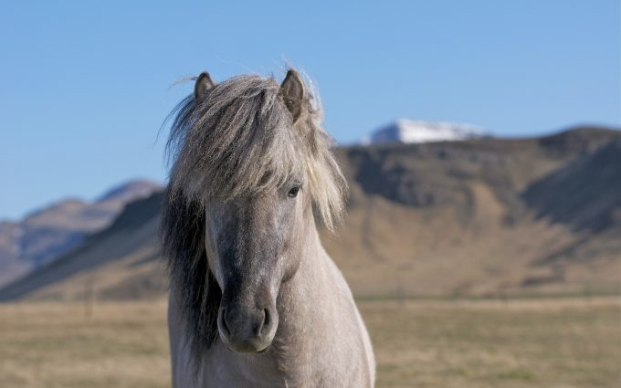 horse pictures to print