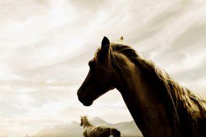 horse wallpaper A1