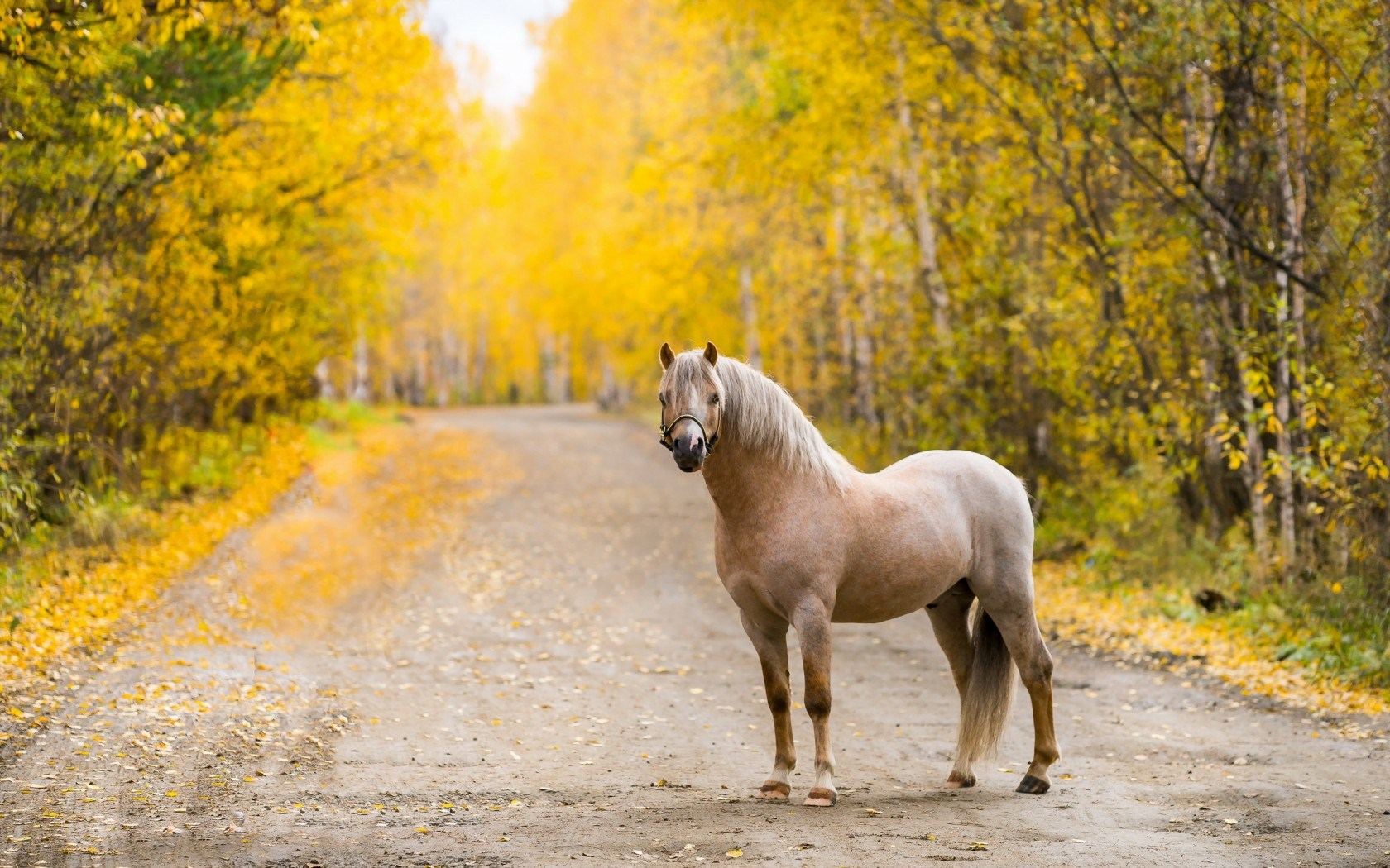 horse wallpaper download