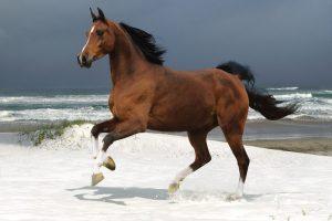 horse wallpaper free
