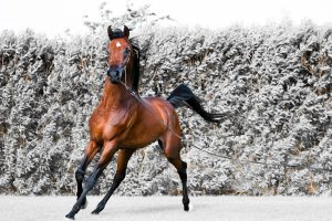 horse wallpaper hd free download