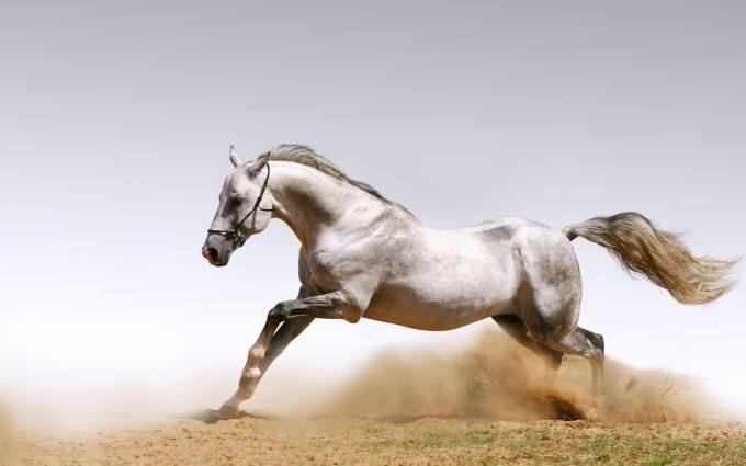 horse wallpaper images