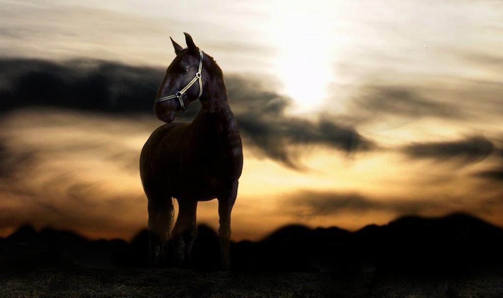 horse wallpaper sunset hd desktop wallpapers 4k hd