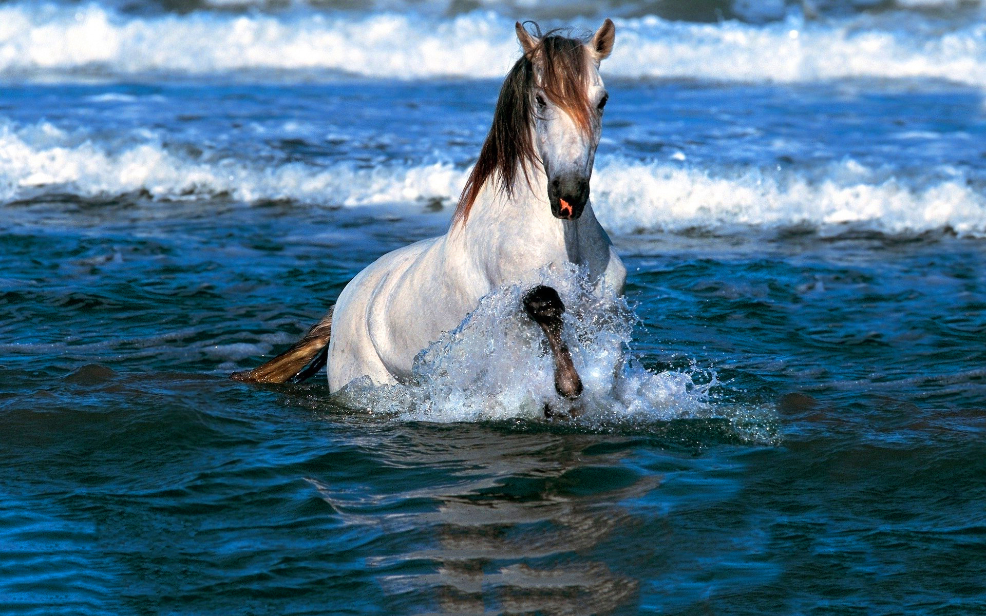 horse water hd desktop wallpapers 4k hd
