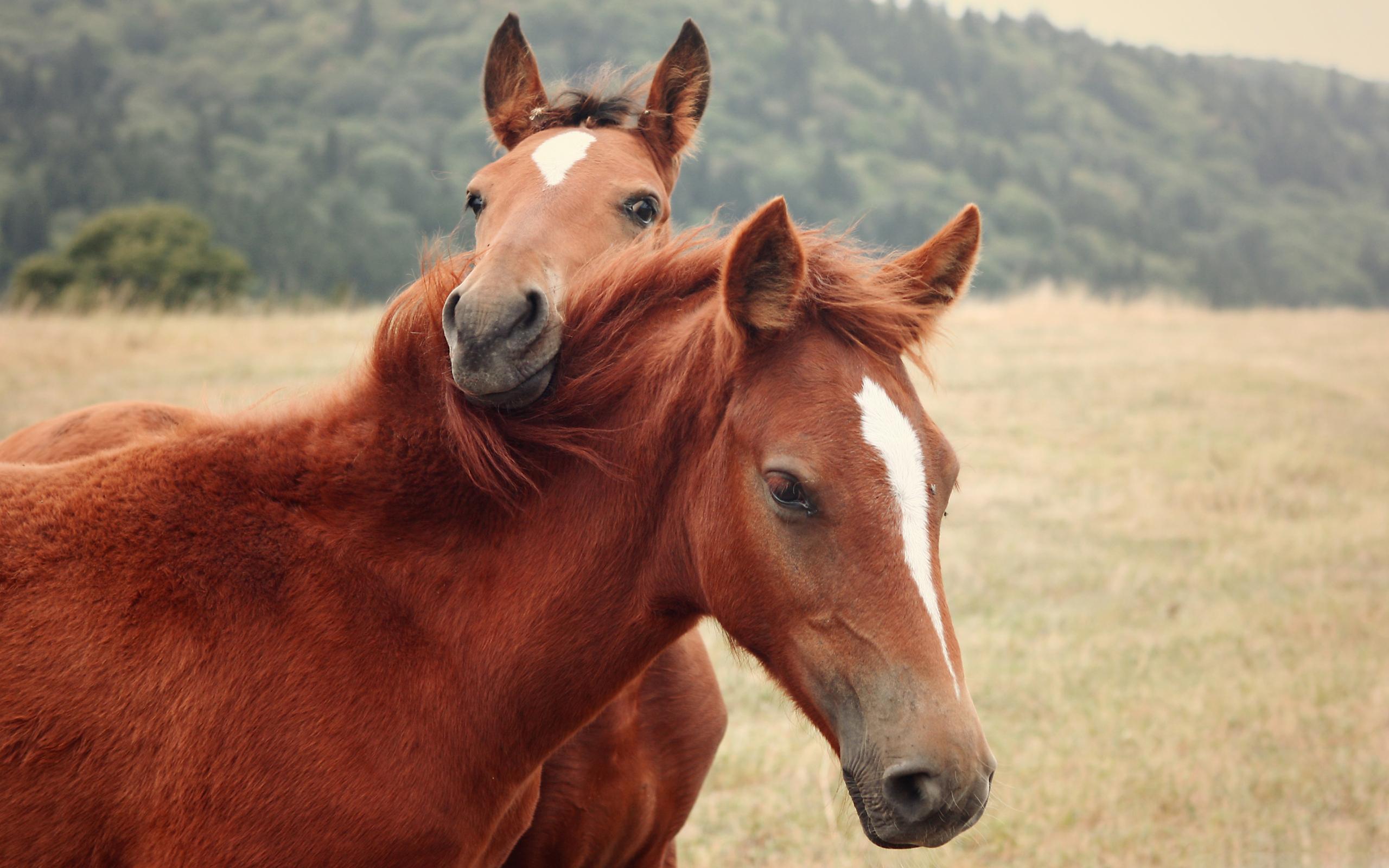 horses cuddle