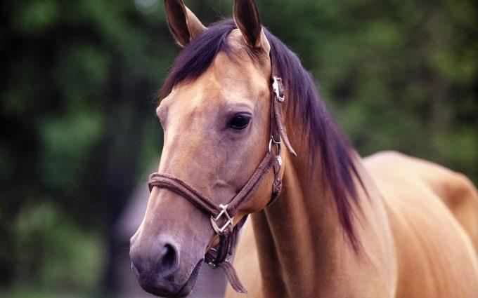 horses photos