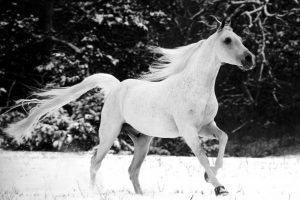 horses pictures A17