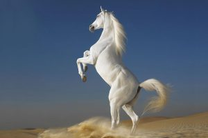 horses pictures A19