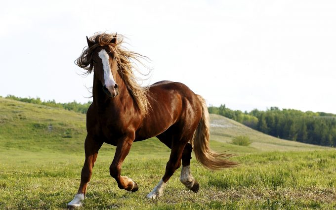 horses pictures A20