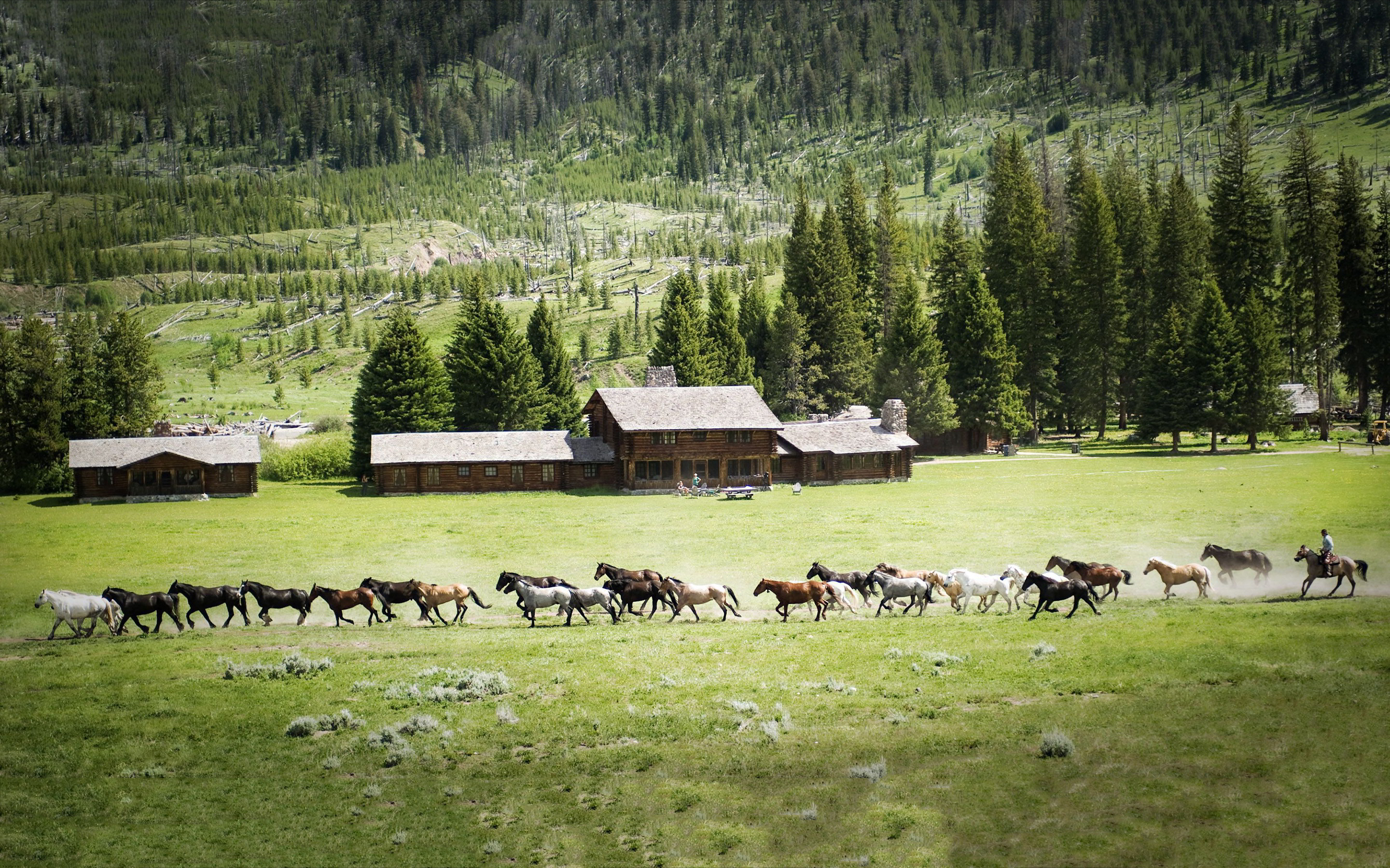 horses pictures A21