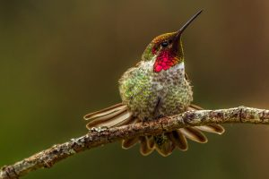 hummingbird image hd