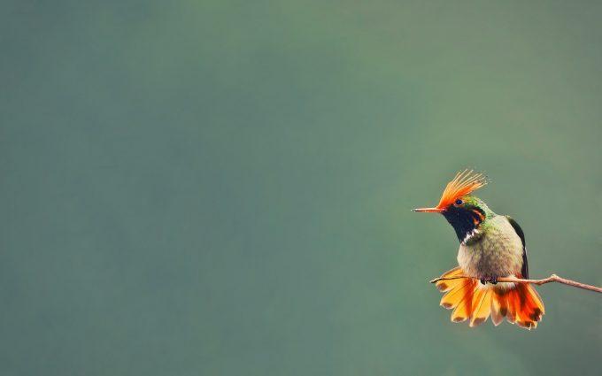 hummingbird wallpaper beautiful