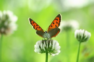 images for butterflies