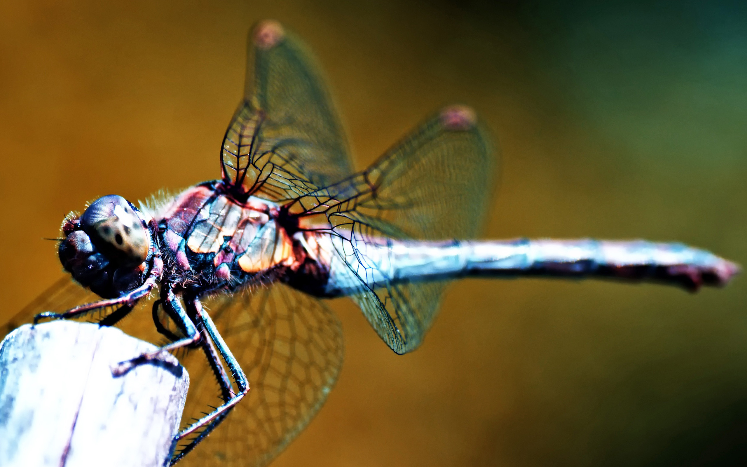 images for dragonfly