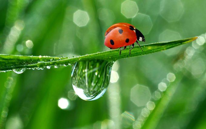 images ladybugs