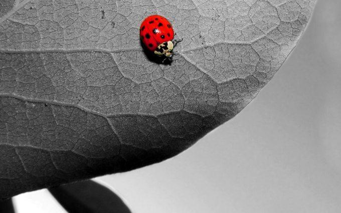 images of a ladybug