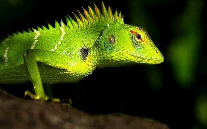 images of a lizard