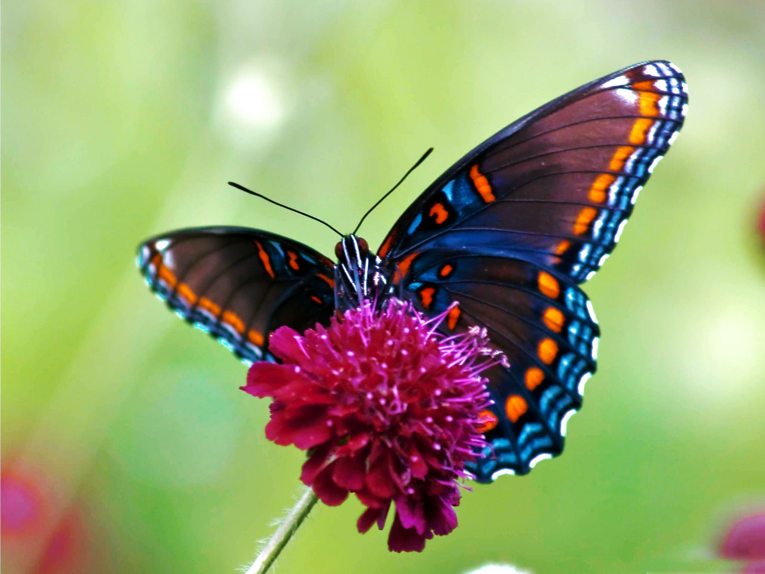 images of butterfly wallpapers