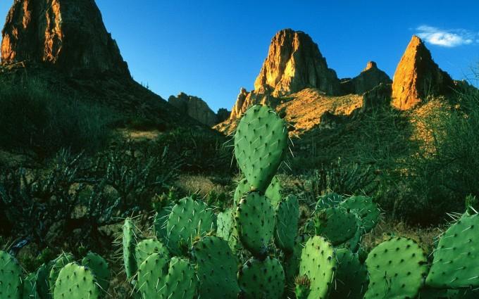 images of cactus in desert