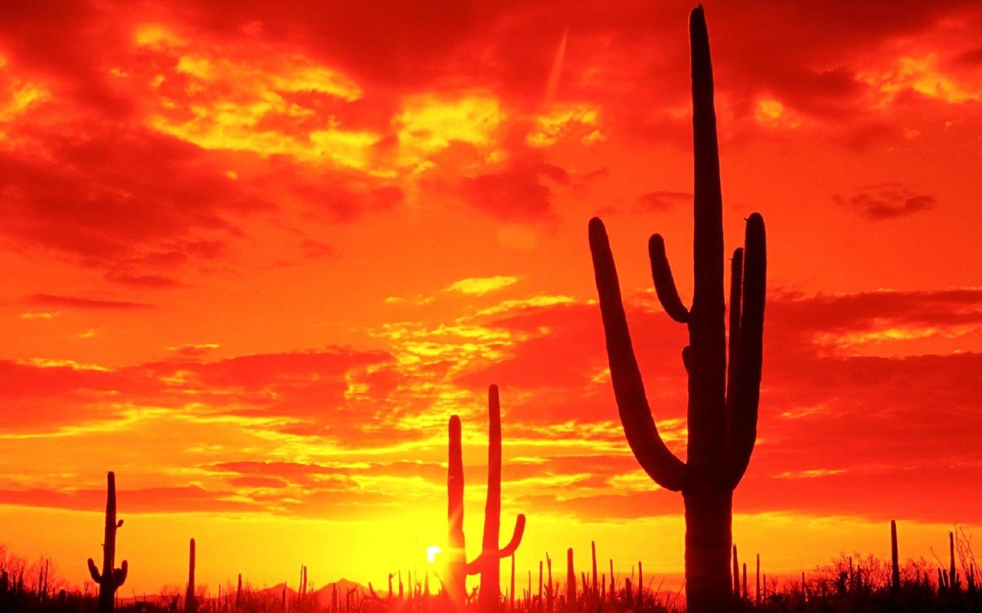 images of cactus