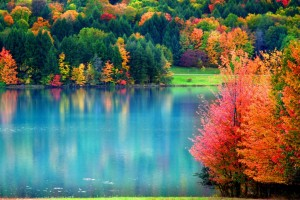 images of fall trees hd