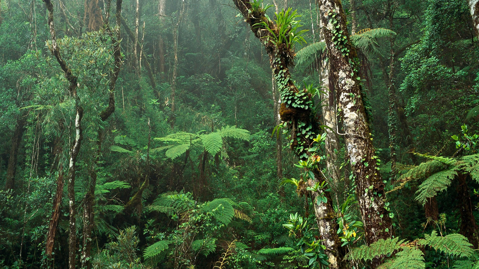 images of forests hd