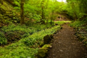 images of forests path