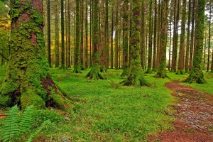images of forests stunning