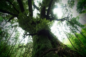 images of forests tree