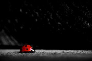 images of ladybugs