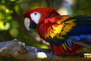 images of macaw