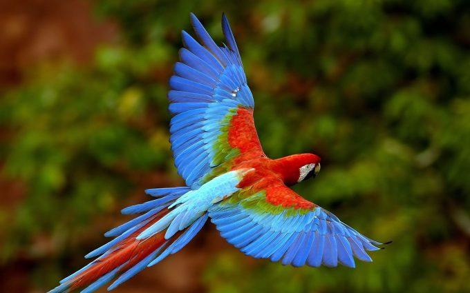 images of parrots
