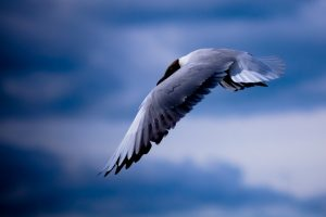 images of seagulls