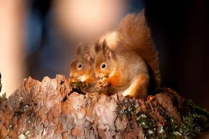 images of squirrel