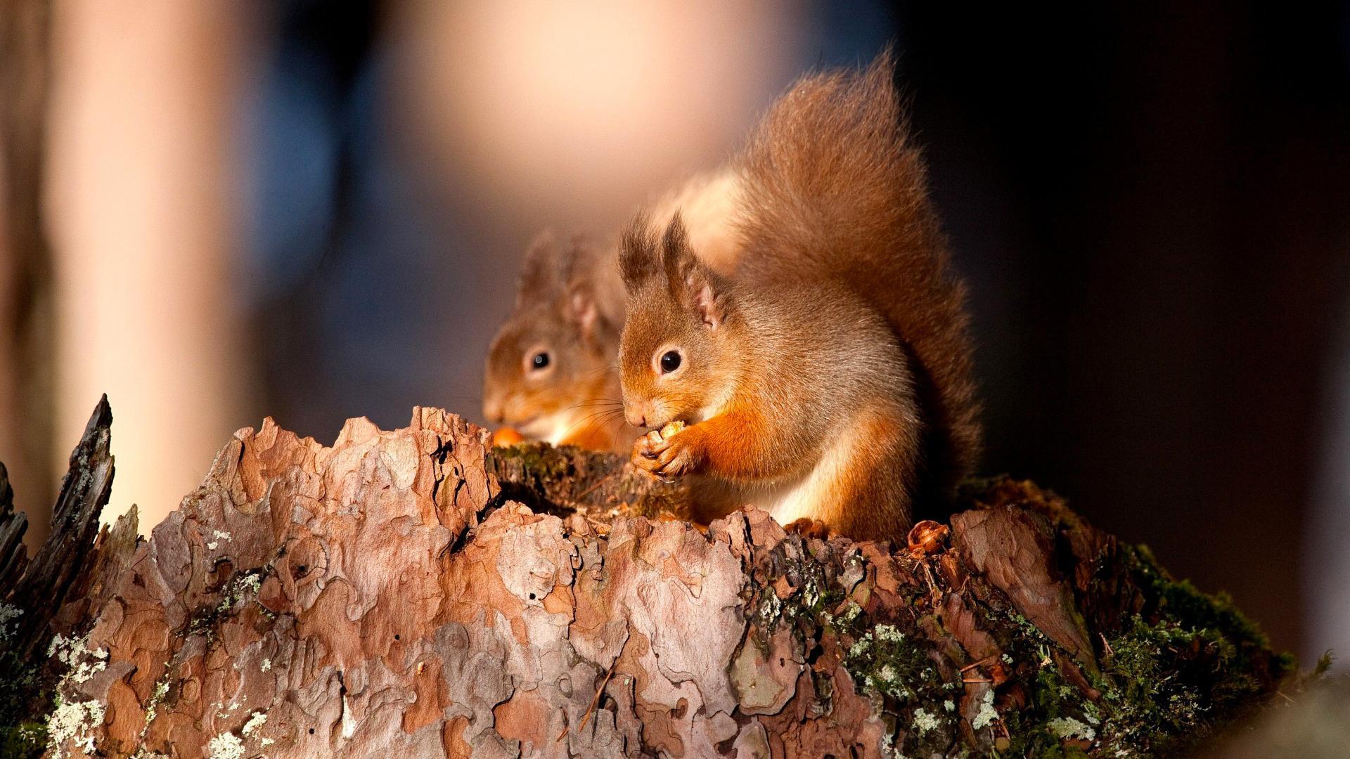images of squirrel