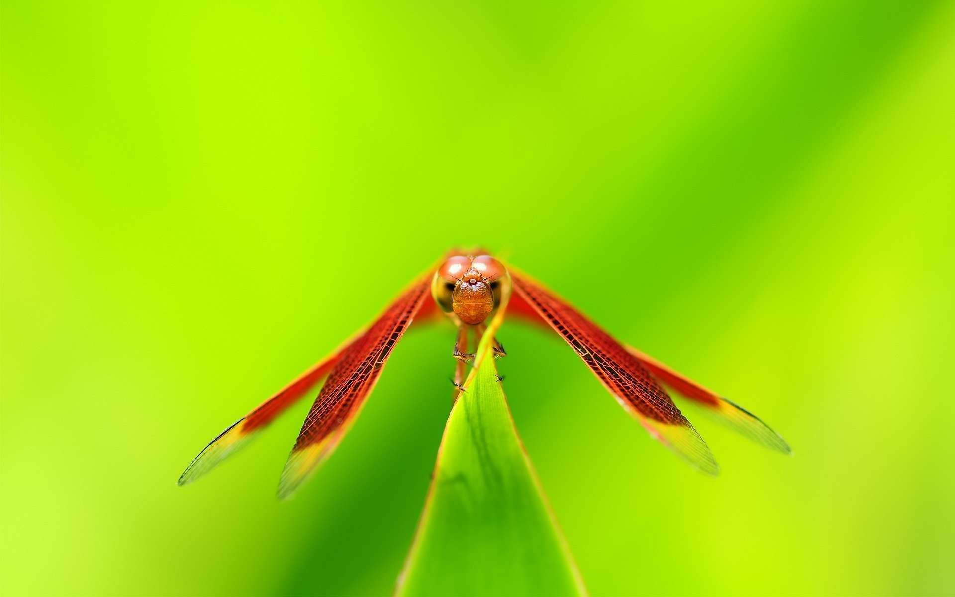 insect hd wallpaper