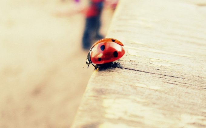 insect wallpaper nature