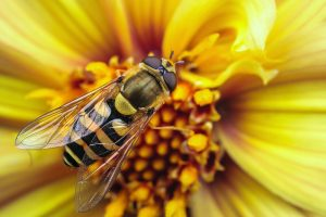 insects hd wallpapers