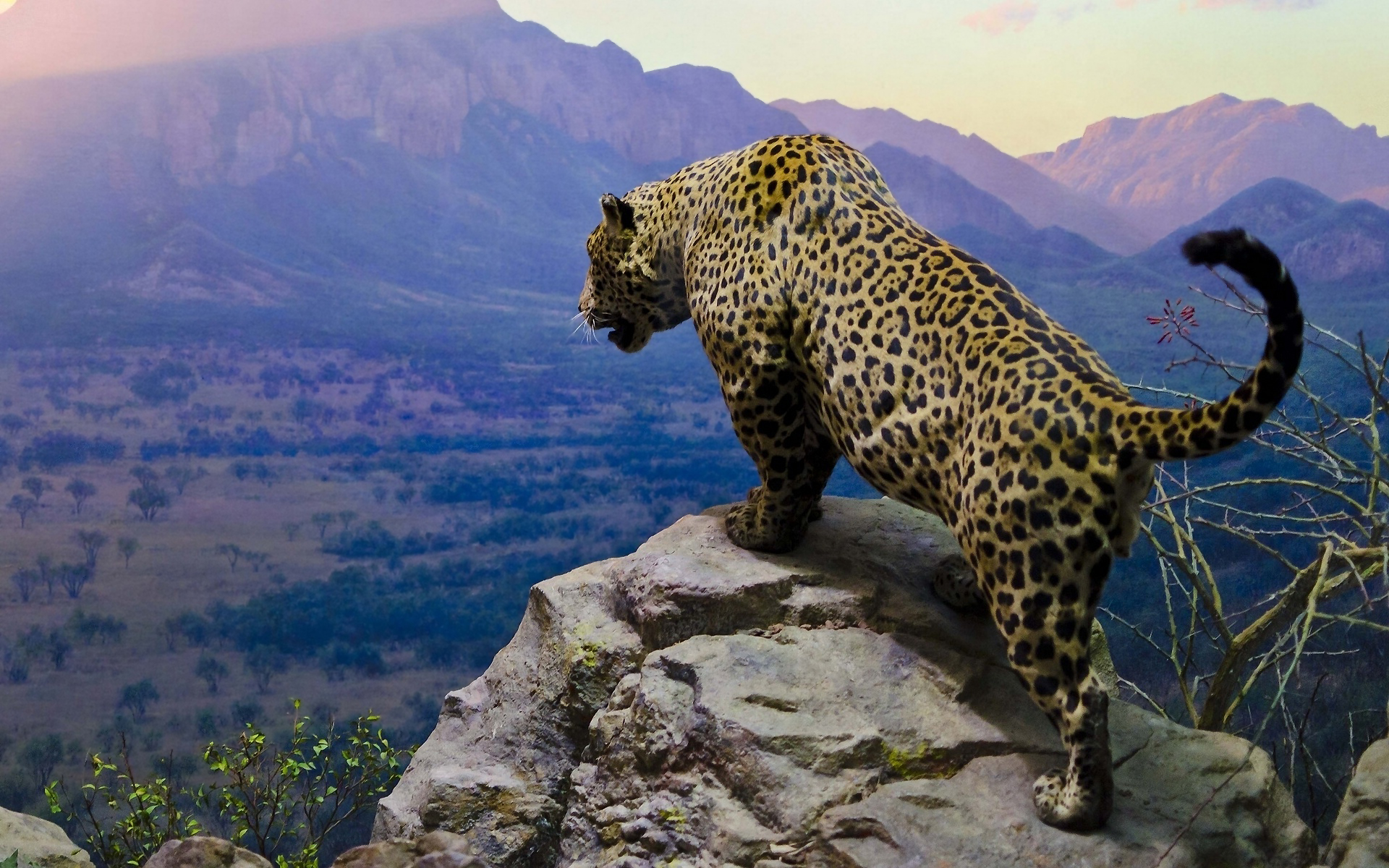 Jaguar images hd desktop wallpapers 4k hd - Jaguar animal hd wallpapers ...