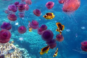 jelly fish hd