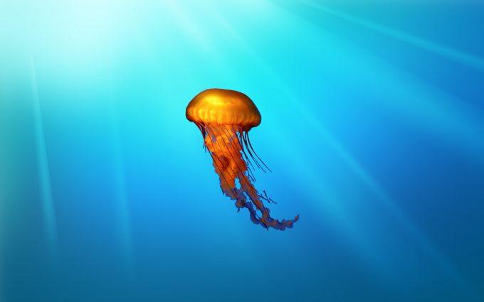 jellyfish beautiful