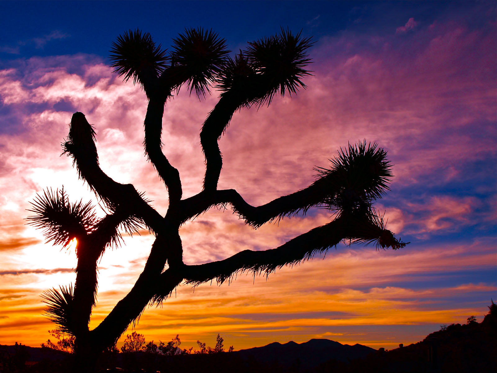 joshua tree wallpaper