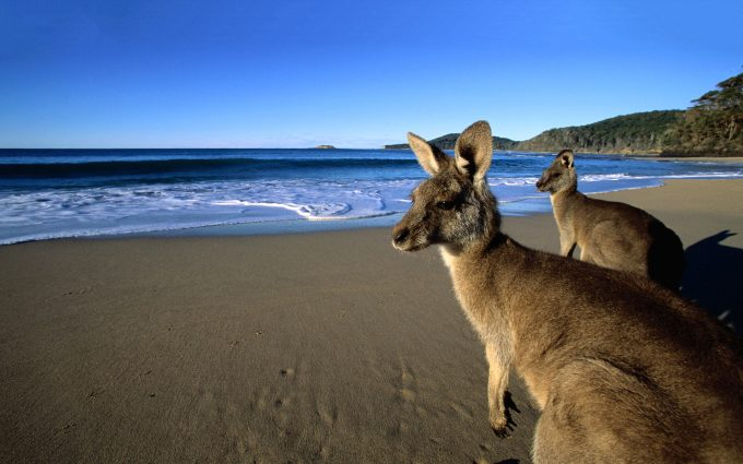 kangaroo beach wallpaper