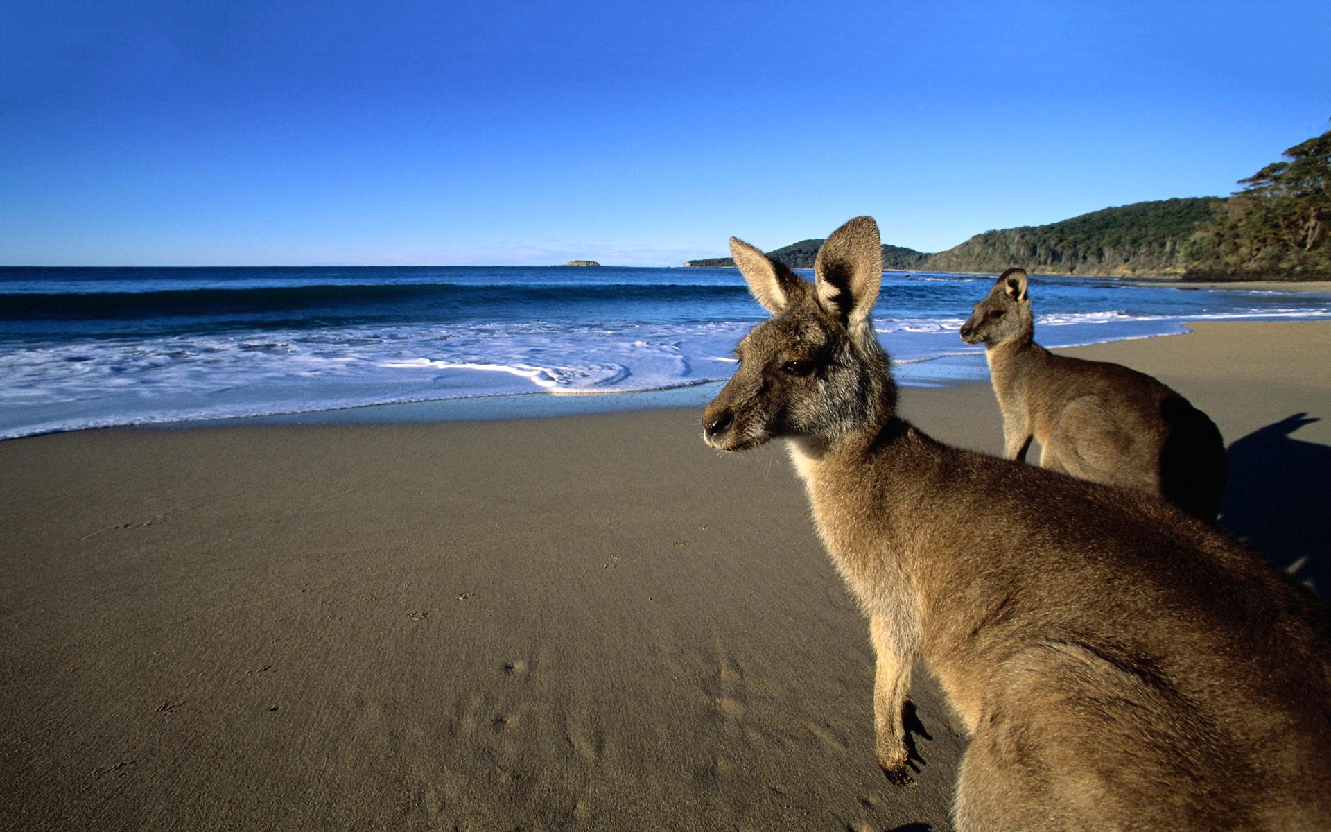 kangaroo beach wallpaper