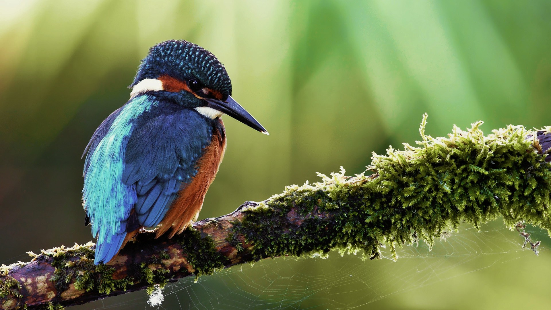 Kingfisher Calendar Wallpaper : Kingfisher calendar pictures hd desktop wallpapers k