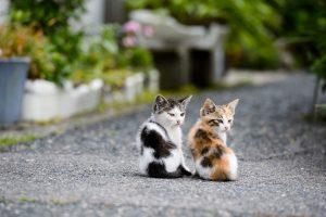 kitten A2