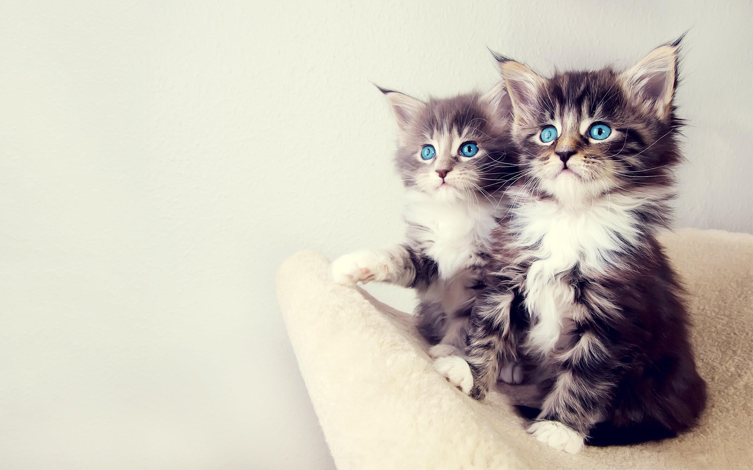 kitten A3
