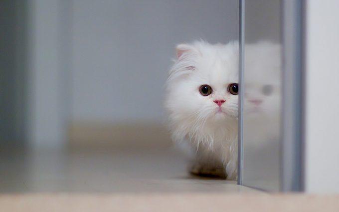 kitten A4