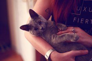 kitten A5
