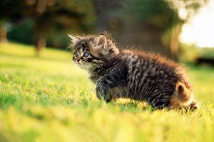kitten A6